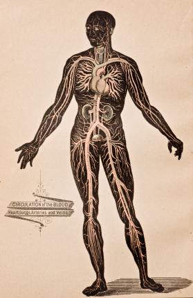 human-body-drawing.jpg